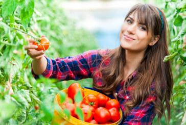 איך הפכה חנות ירקות קטנה ברמת גן לטרנד החם של חובבי הקולינריה
